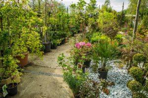 Grand choix de plantes pour votre jardin à Verdun