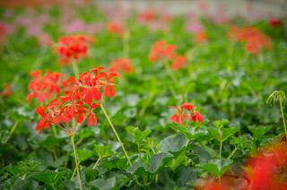 Fleurs variétés rares et originales