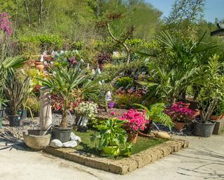 Fleurs, légumes et pépinière chez Sodiplante Jardinerie à Haudainville Verdun