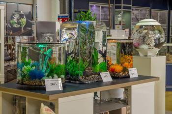 Aquariums déco chez Lombard à Verdun en Meuse