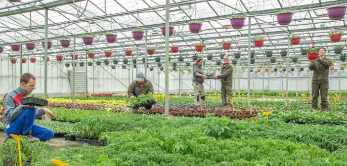 Jardins de Villers : vos légumes et plantes fleuries à Mont-Villers en Meuse