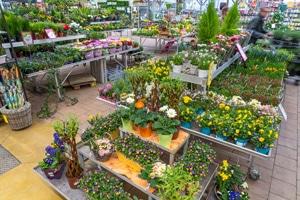 Jardinerie Lombard Verdun