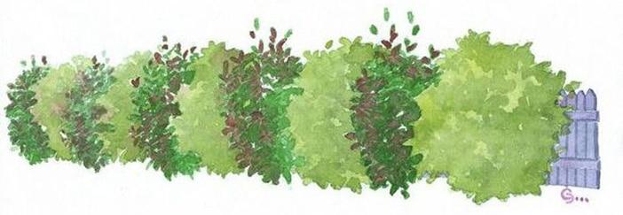 Renaturer son jardin avec les haies champêtres